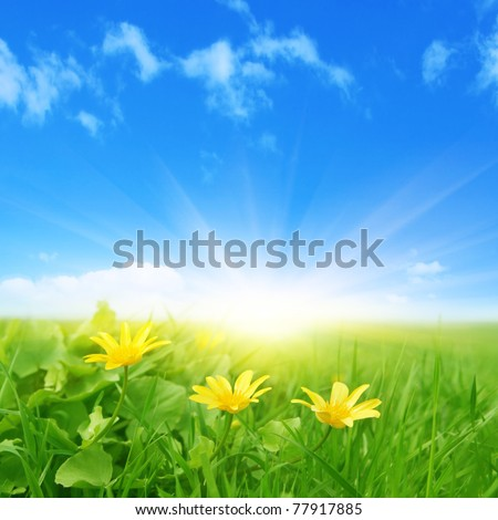 Green field with spring flowers and sun in blue sky. - stock photo