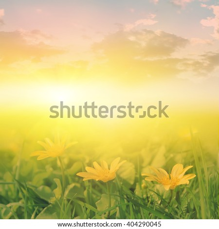 Green field with spring flowers during sunset.