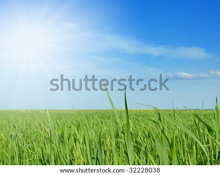 Green field with sunbeam