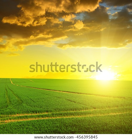 Green field with sunset sky. Spring landscape. - stock photo