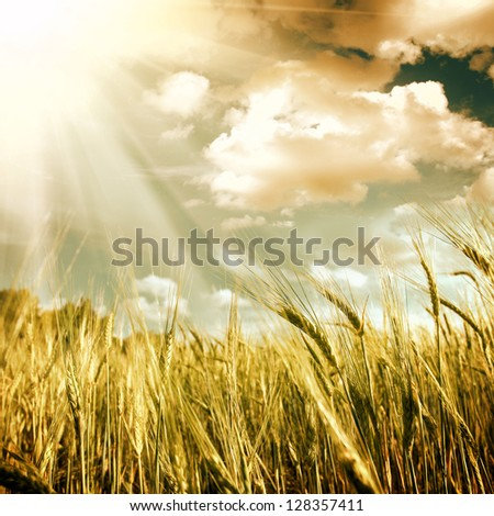 green field with the blue sky - stock photo