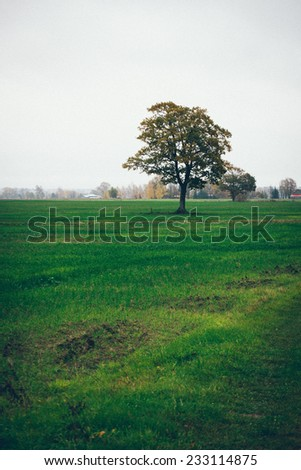 green field with trees in the autumn in country. Vintage effect. Retro grainy color film look. - stock photo