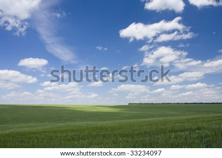 green field with wheat and blue cloudy sky