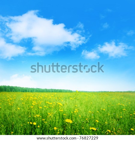 Green field with yellow wildflowers and blue sky. - stock photo
