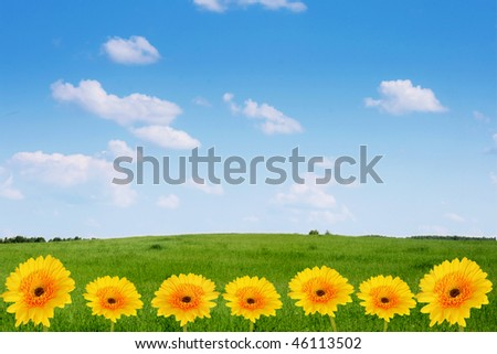 Green field,yellow flowers and blue sky. - stock photo
