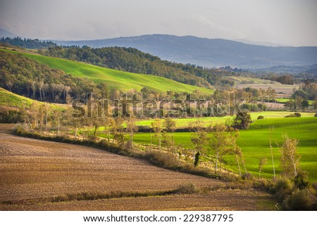 Green fields and forest in the landscape