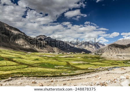 Green fields and Himalaya mountains in the back - Ladakh, India - stock photo