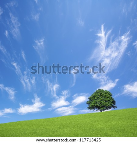 Green fields and lone tree