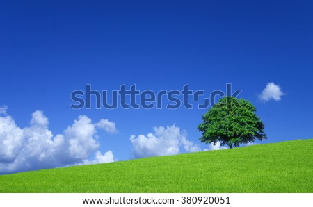 Green fields and lone tree - stock photo