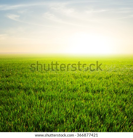 green fields at the sunrise - stock photo