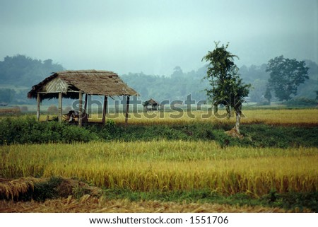 Green fields display lush colors under a soft morning light in the highland town of Hsipaw in Myanmar. - stock photo