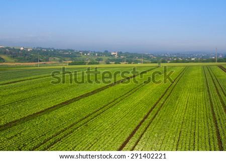 green fields landscape - stock photo