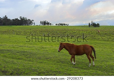 Green fields of grass and grazing horse in Hawaii