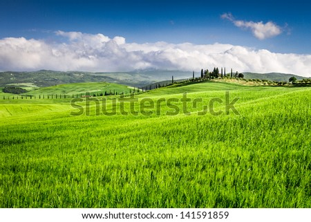 Green fields of wheat in the countryside, Tuscany - stock photo