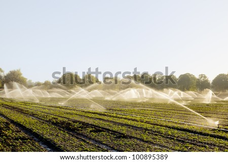 Green fields on spring irrigated with a plenty of sprinklers - stock photo