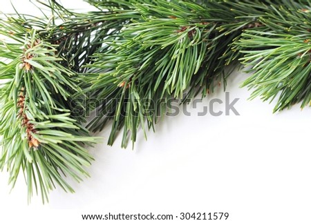 green fir conifer bough white background framed natural decoration  - stock photo