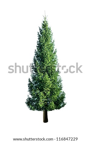green fir isolated on white - stock photo