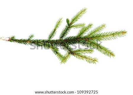 green fir tree branch on the white - stock photo