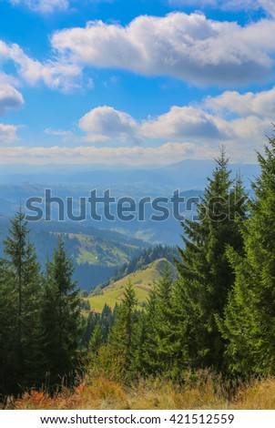 Green fir trees in the hills on a sunny day