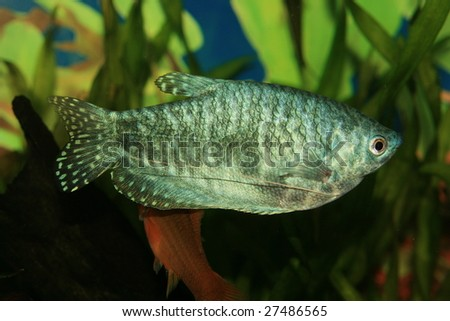 Green fish - stock photo