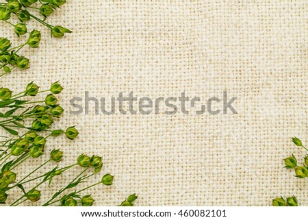 Green  flax twigs with linseed on the natural linen fabric background, frame - stock photo