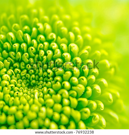 green flower - stock photo