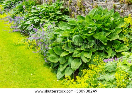 Green flower borded in the old walled Bristish garden - stock photo