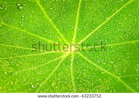 green flower leaf background with droplets - stock photo