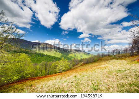 green flower meadows in the Carpathian mountains