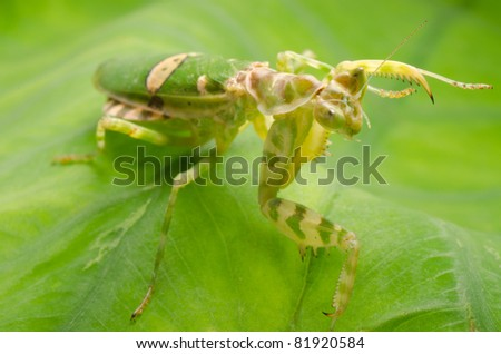 green flower praying mantis on leaf