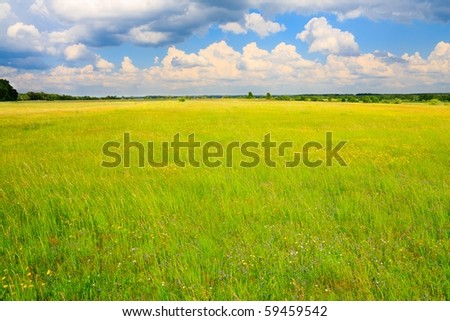 Green, flowery meadow and cumulus clouds above. - stock photo