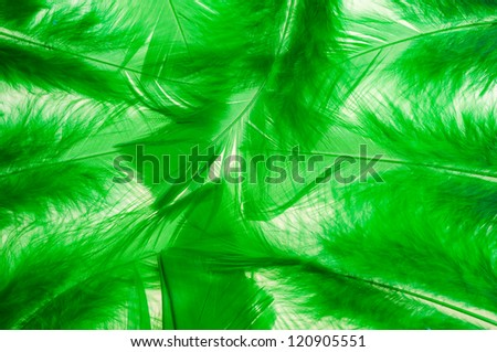 Green fluffy feathers background - stock photo