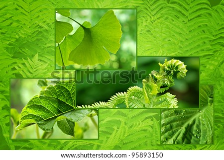 Green foliage collage background created from several closeup images of green plant life.  Copy space included in composition. - stock photo