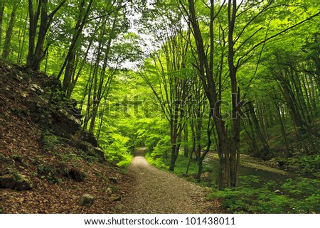 Green foliage in forest in spring by stream and waterfalls