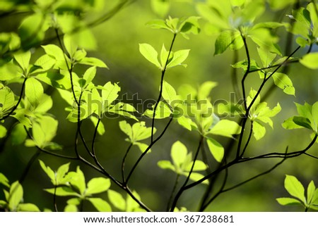 Green foliage in Japan during Springtime - stock photo