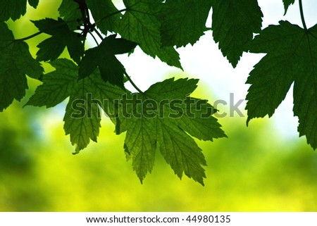 Green foliage in spring - stock photo