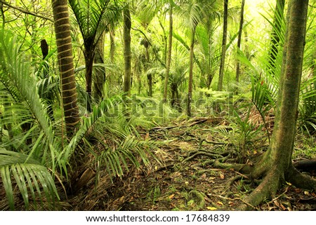 Green foliage in tropical rain forest - stock photo