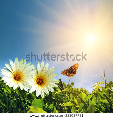 Green foliage with two daisies and butterfly under sunny blue sky - stock photo