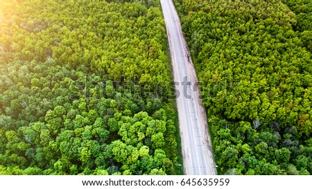 Green forest and asphalt road from above