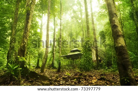 Green forest and huts in a misty morning, Malaysia. - stock photo