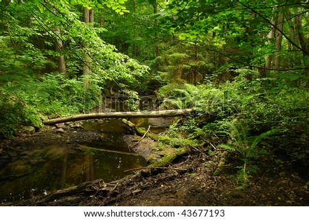 Green forest and river in Lithuania, Europe - stock photo