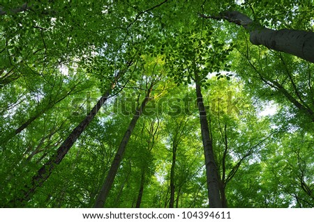 Green forest background, tree foliage. - stock photo