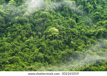 Green forest background with mist. - stock photo