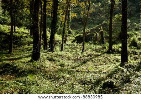 green forest, early winter  time - stock photo