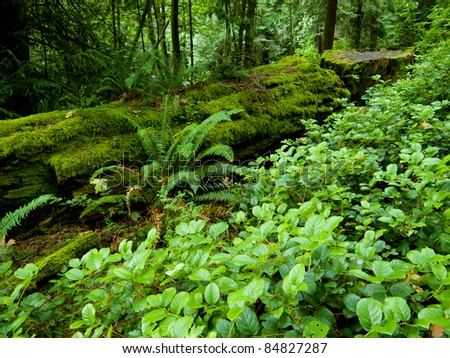 Green forest floor