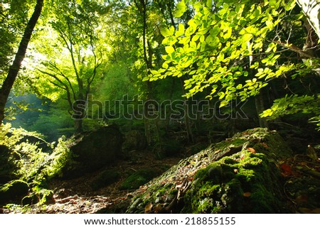 Green forest illuminated by the morning sun, from the inside - stock photo