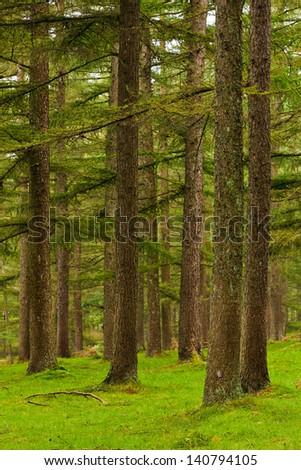 Green forest in autumn season. Gorbea, Bizkaia, Spain - stock photo