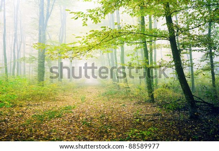 Green forest in fog - stock photo