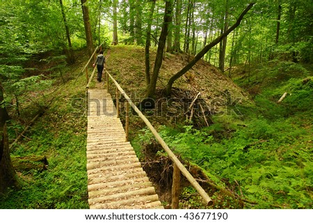 Green forest in Lithuania, Europe - stock photo