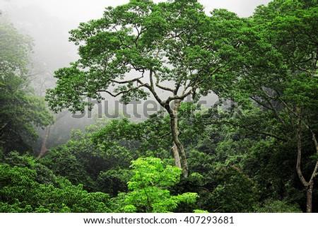 Green forest in misty morning. Phuket, Thailand - stock photo